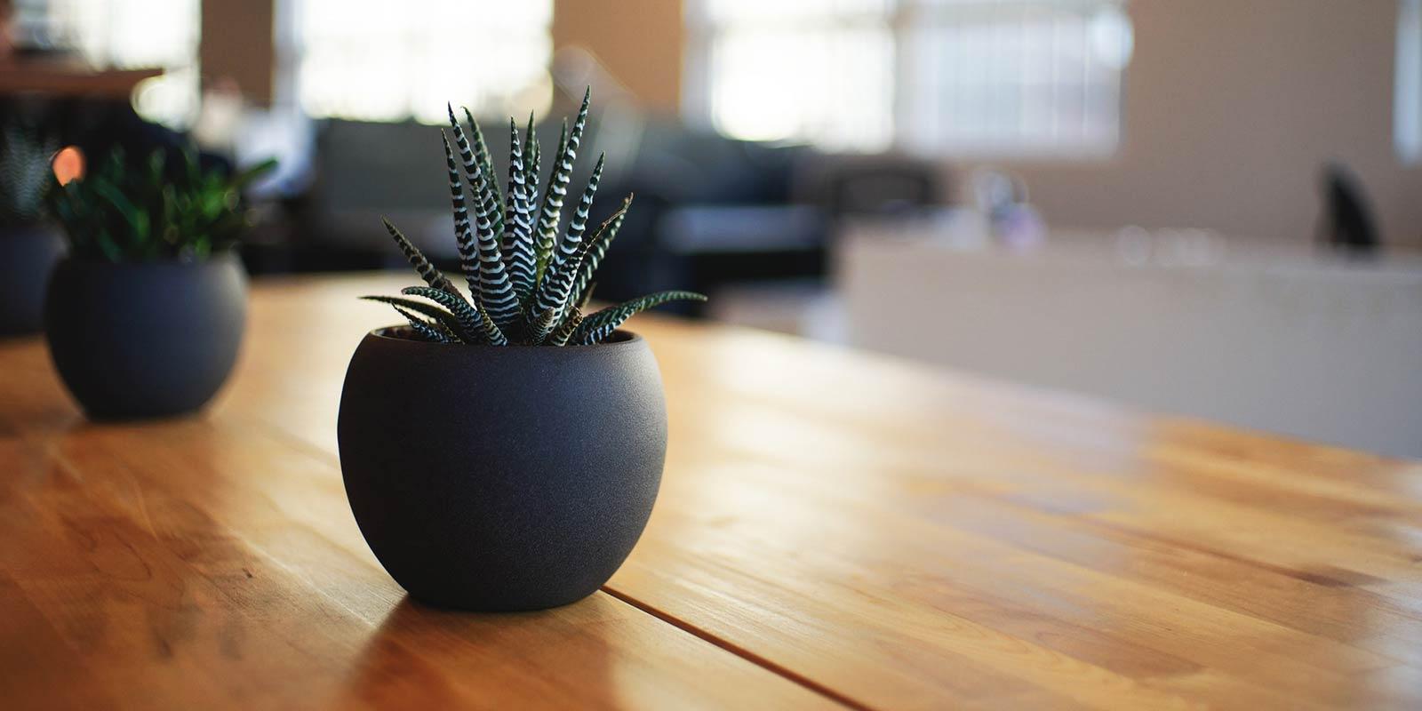 Growing Indoor Cacti